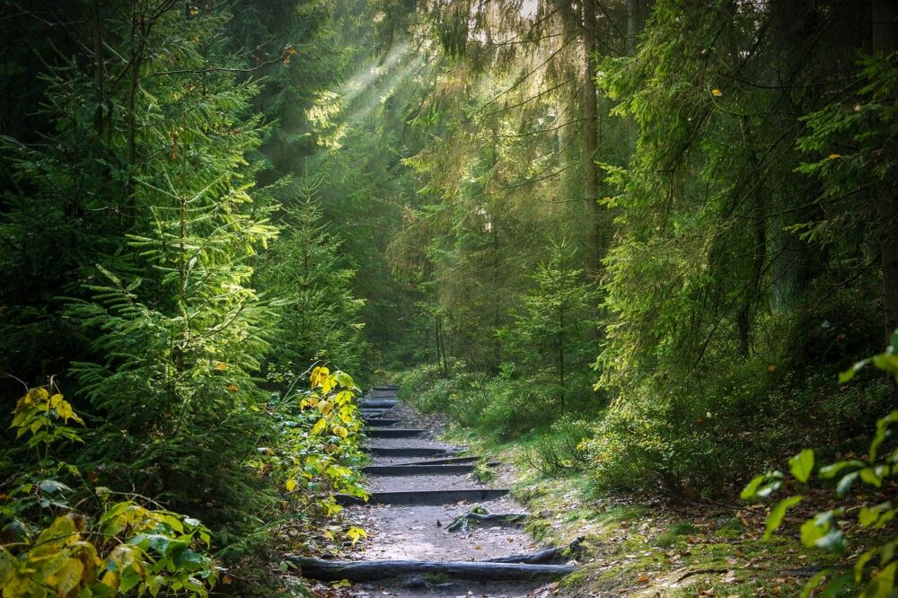 Forest Away Forest Path Path Trees  - Seaq68 / Pixabay